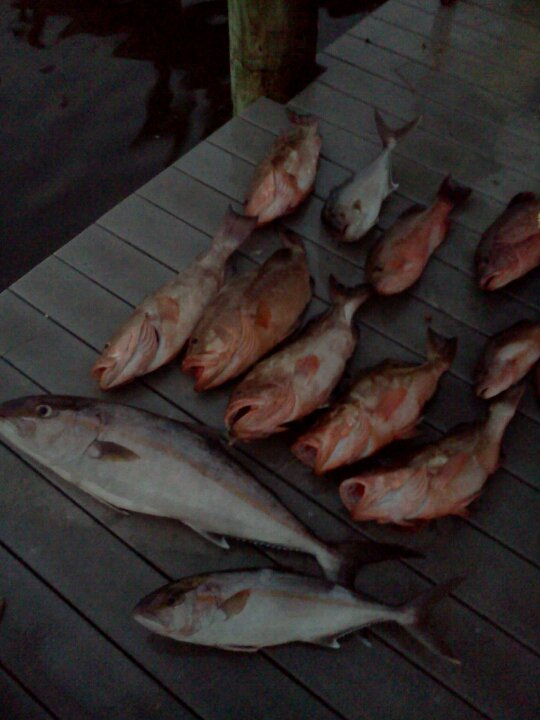 grouper (1)