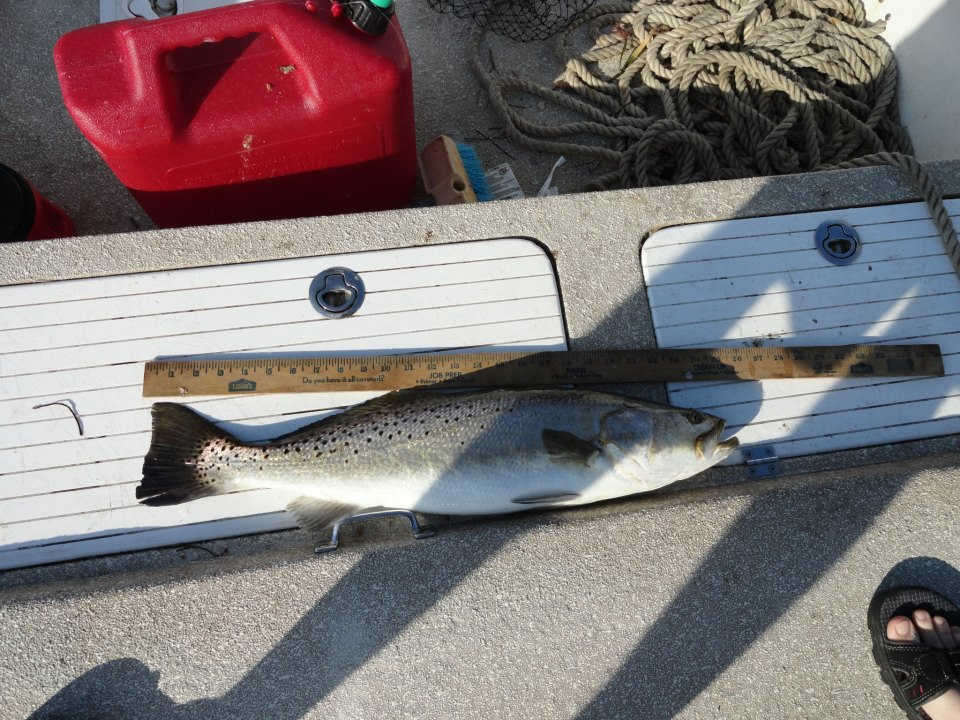 trout (3)